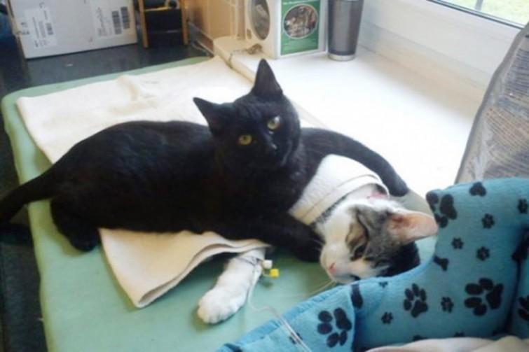 gato-enfermeiro-como-nao-amar-eles-blog-usenatureza