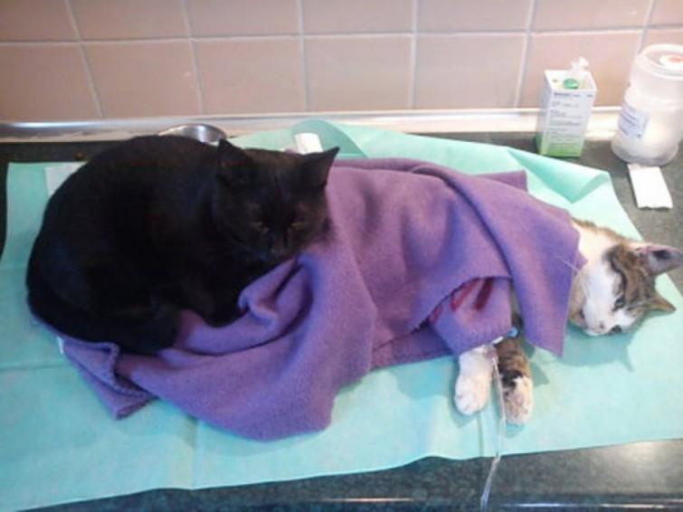 gato-enfermeiro-como-nao-amar-eles-polonia-blog-usenatureza