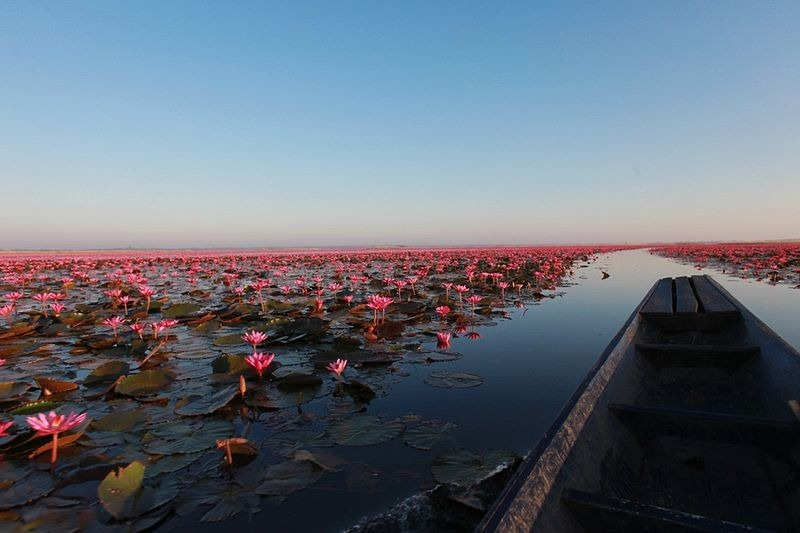 o-incrivel-lago-das-lotus-vermelhas-blog-usenatureza