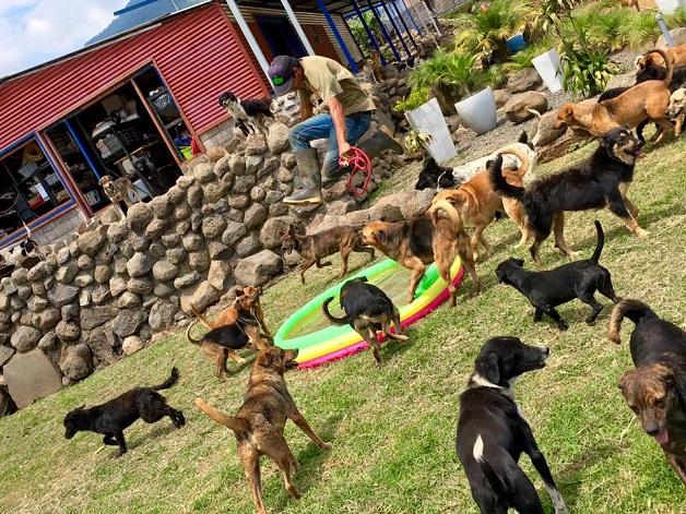 o-paraiso-dos-vira-latas-respeito-aos-animais-blog-usenatureza