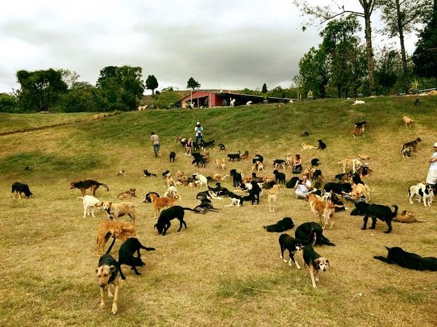 o-paraiso-dos-vira-latas-respeito-aos-animais-costa-rica-blog-usenatureza