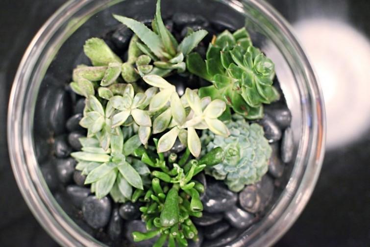 terrario-no-abajur-veja-como-fazer-simples-e-facil-blog-usenatureza