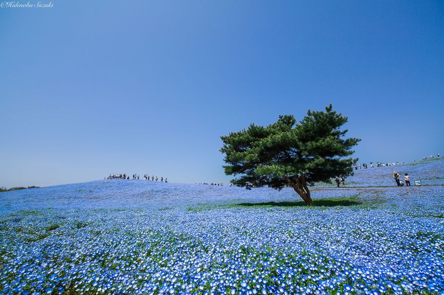 a-primavera-colorida-nojapao-blog-usenatureza