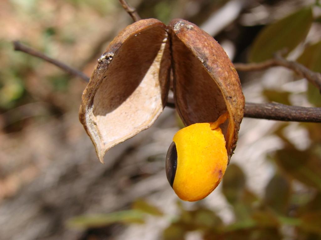conheca-o-oleo-de-copaiba-e-seus-beneficios-fruto-blog-usenatureza