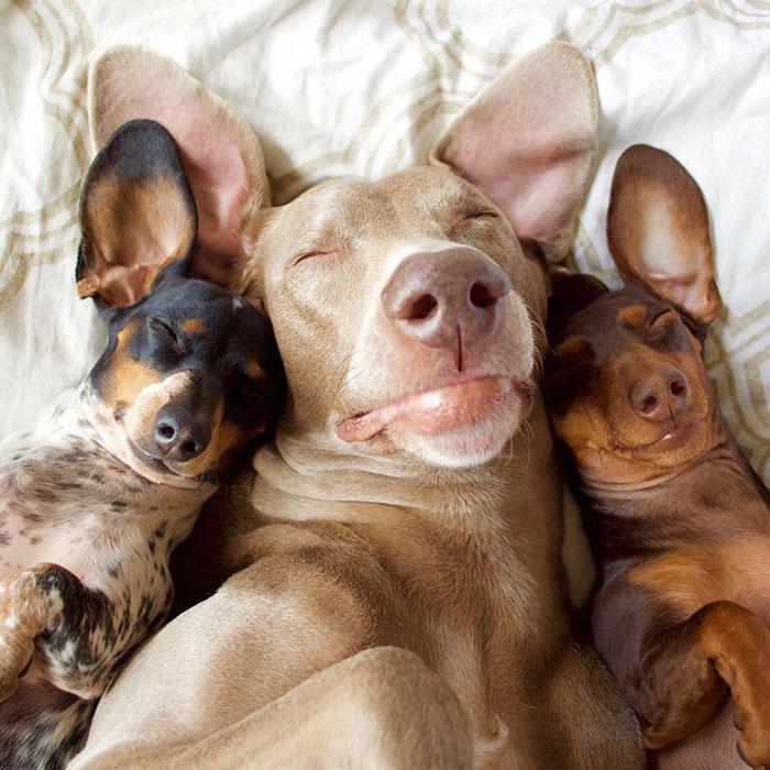 conheca-o-trio-inseparavel-blog-usenatureza
