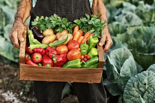 beneficios-dos-produtos-organicos-blog-usenatureza