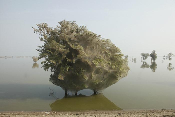 arvores-teias-de-aranhas-do-paquistao-curiosidade-da-natureza-blog-usenatureza