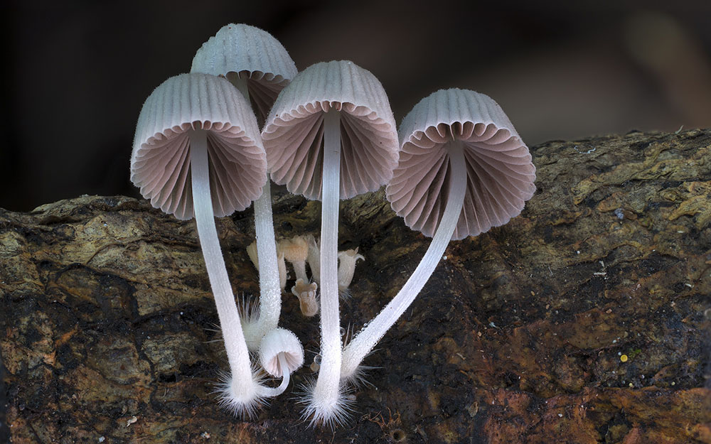 cogumelos-como-voce-nunca-viu-blog-usenatureza