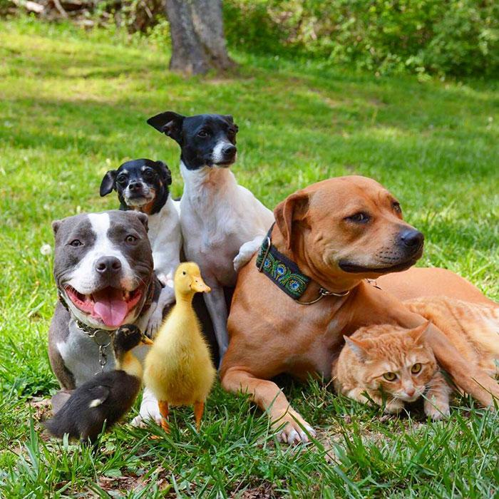 uma-familia-diferente-e-sempre-juntos-caes-gatos-patos-blog-usenatureza