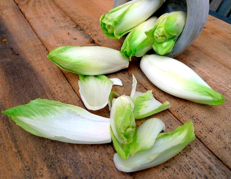 como-cultivar-endivias-em-casa-jardinagem-blog-usenatureza