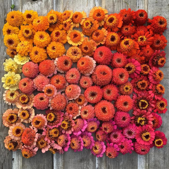 floristas-possuem-o-melhor-emprego-erin-blog-usenatureza