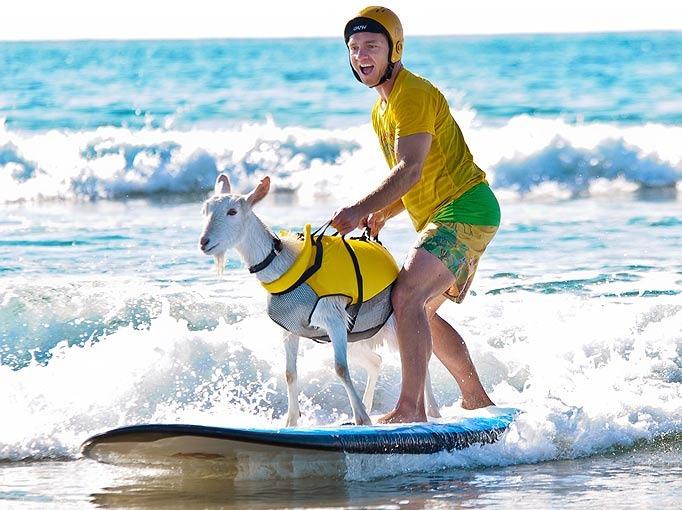 o-bode-que-surfa-california-blog-usenatureza