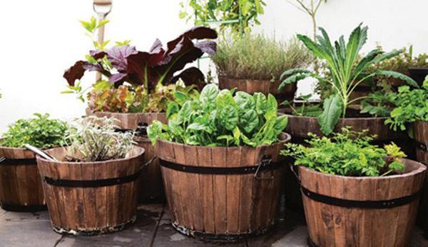 aprenda-a-produzir-seus-proprios-alimentos-horta-em-casa-blog-usenatureza