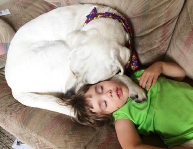 cachorro-proporciona-qualidade-de-vida-blog-usenatureza