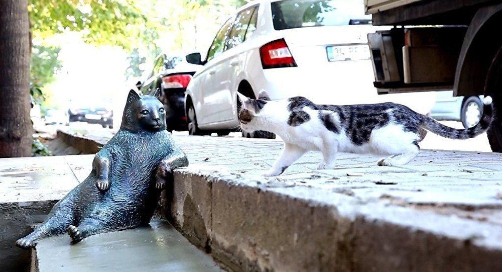 estatua-gato-instambul-usenatureza