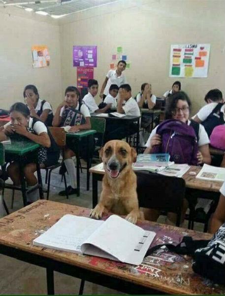 luck-o-cachorro-aluno-blog-usenatureza