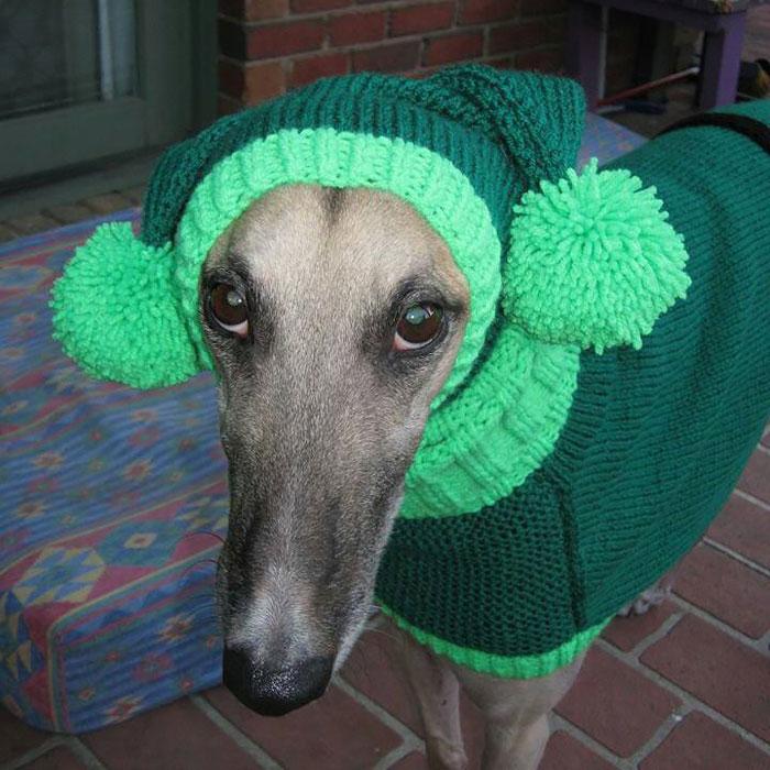 mulher-faz-tricot-para-cachorros-abandaonado-blog-usenatureza