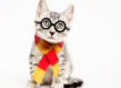 atencao-os-gatos-precisam-de-abrigo-harry-potter-blog-usenatureza